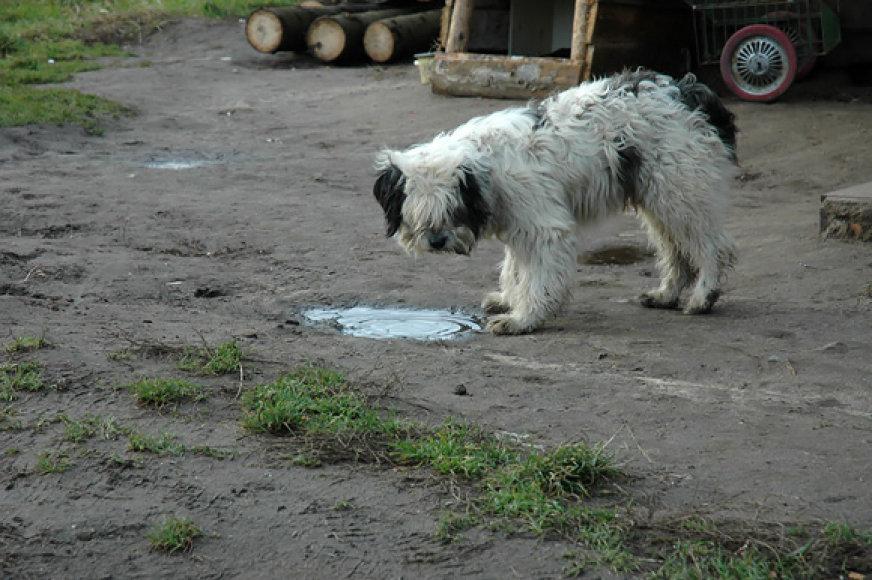 Vilniaus čigonų tabore