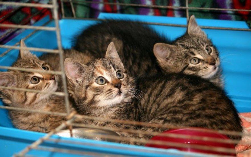 Prekybos centre – namų ieškantys katinukai.