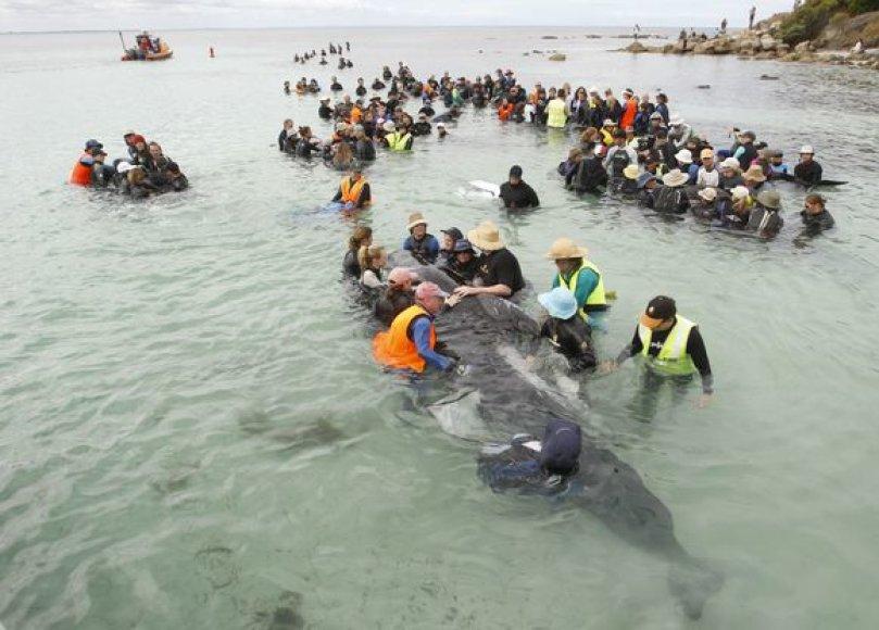 Gelbėjamas delfinas