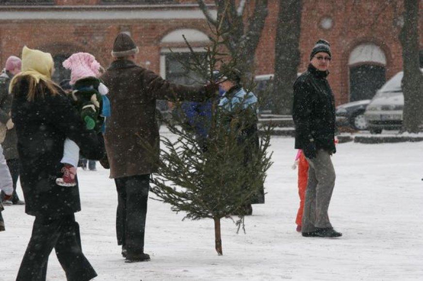 Į šventę Kauno Rotušės aikštėje kauniečiai raginami atsinešti namuose nupuoštas eglutes.