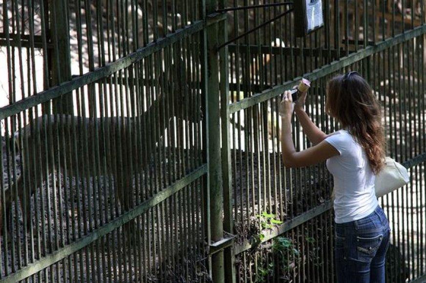 Gyvūnai Kauno zoologijos sode