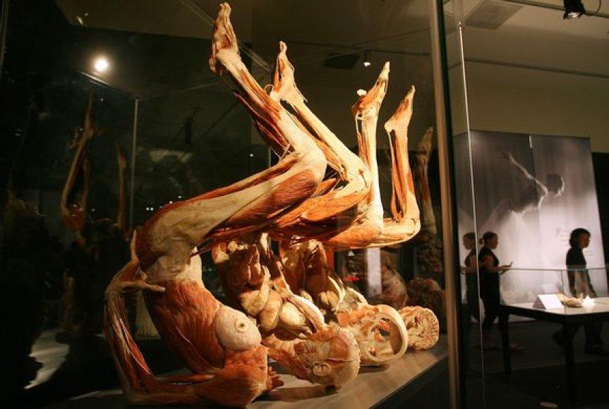 Prieštaringai vertinamas vokiečių medikas konservuoja lavonus ir iš jų kuria skulptūras.