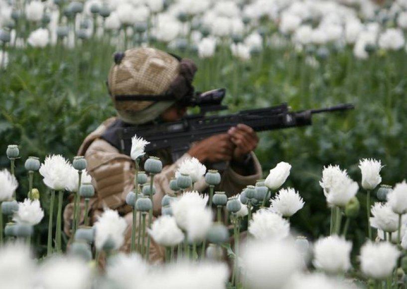 Karys Afganistano aguonų lauke