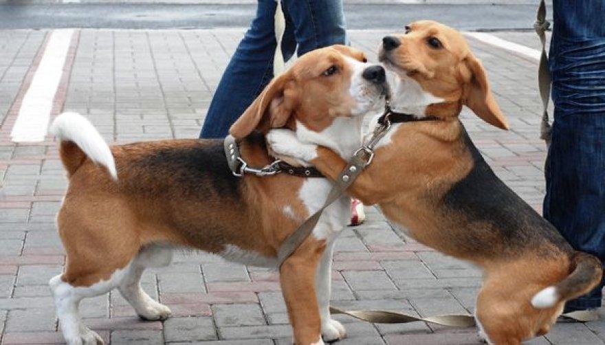 Šunų parodos akimirka