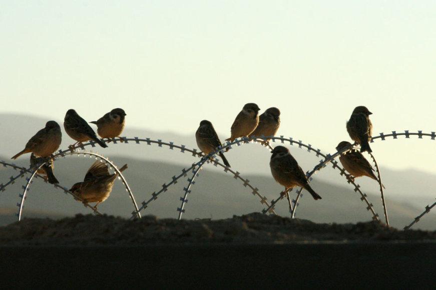 Afganistanas, Goro provincija: žmonės ir gamta