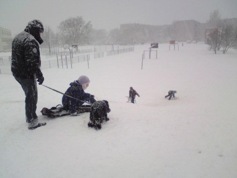 Sniegu džiaugėsi ir išdykęs šuo