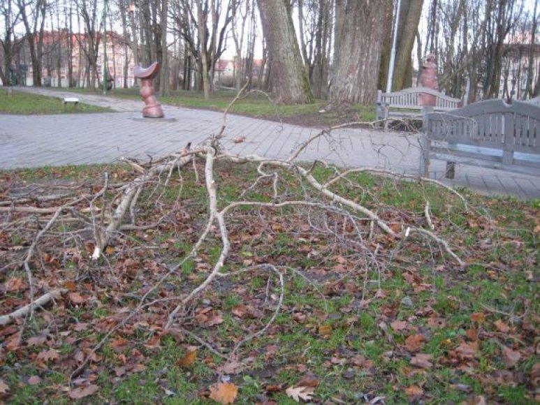 Klaipėdos skulptūrų parkas po vėtros