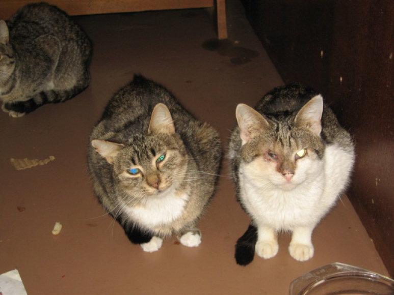 Neprižiūrėtos ir ligotos katės vilnietės bute