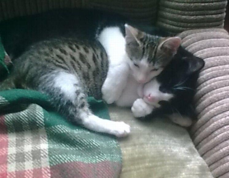 Taip gera užmigti apkabintam.