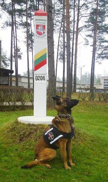 Tarnybinis belgų aviganis Fero