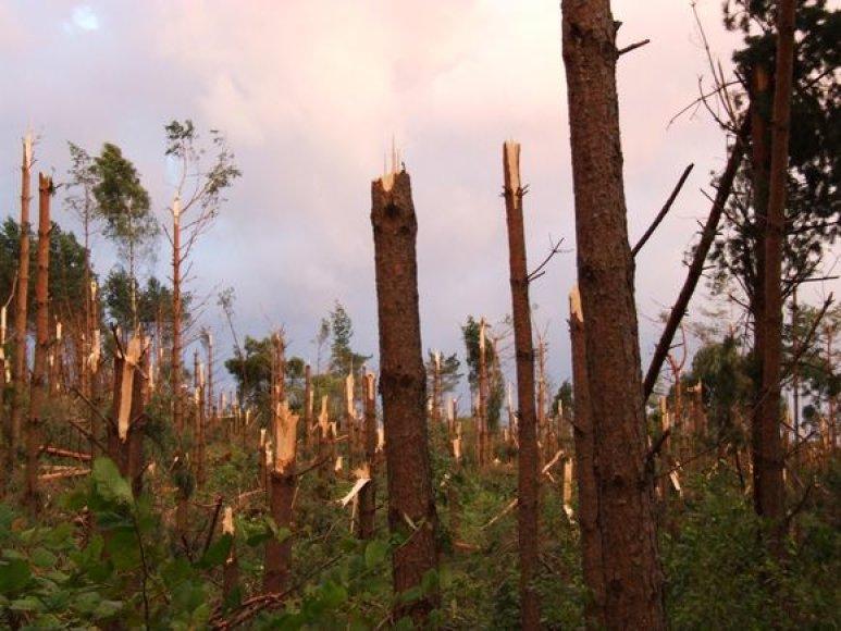 Nuniokotas Pamūšio miškas