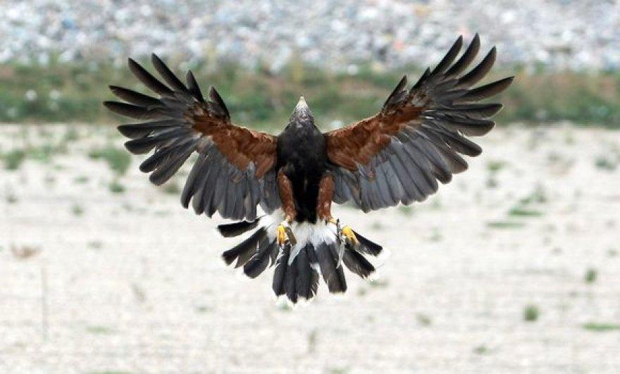 Gracingas paukščio skrydis