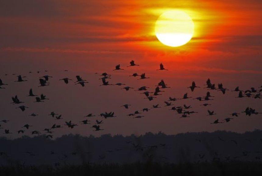 Paukščiai skrenda į pietus...