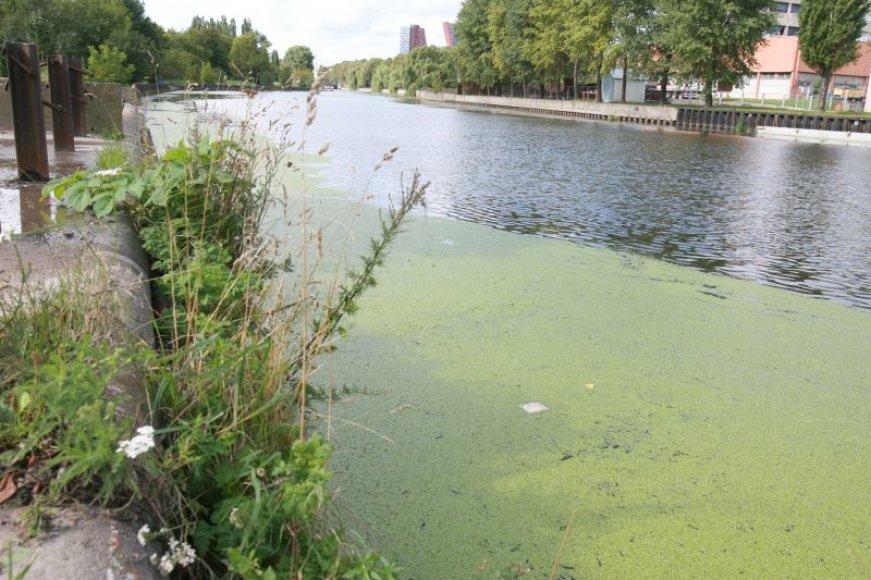 Danės upėje nuolat aptinkama teršalų.