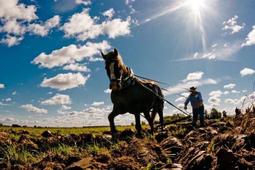 Ūkinininkai baiminasi gresiančių bankrotų.