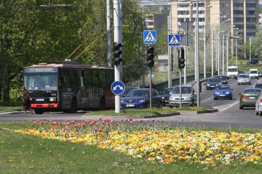 Vilniuje jau pražydo pernai spalį sodintos gėlės. Birželio pradžioje vietą jos užleis vasarinėms gėlėms.