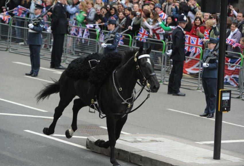 Žirgas, numetęs savo raitelį, pats atrado kelią į arklides.