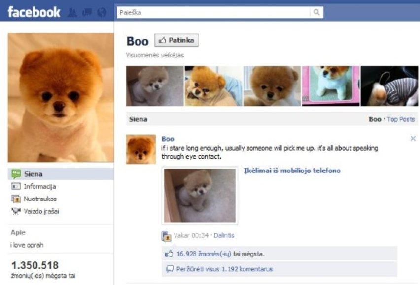 """Populiariausias šuo """"Facebook"""" yra Boo – jis turi per 1,3 mln. gerbėjų."""