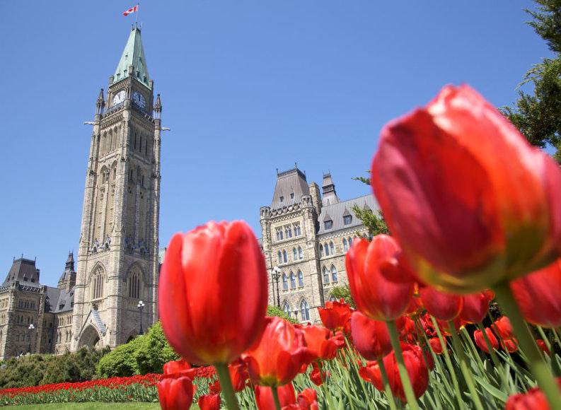 Shutterstock.com/Tulpių apsuptyje – Kanados parlamentas