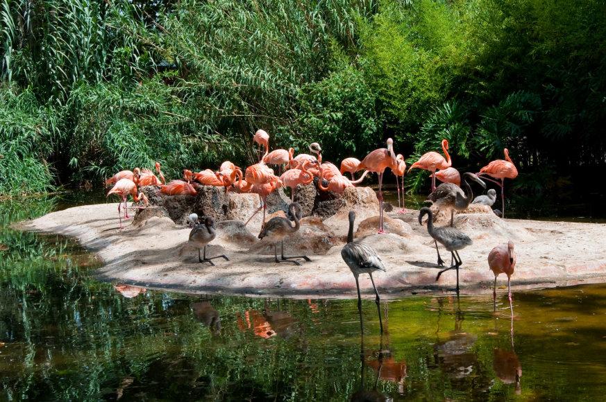 123rf.com /Flamingai Barselonos zoologijos sode