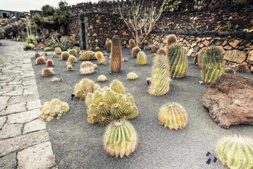 123rf.com nuotr./Ugnikalnio žemė tinkama kaktusams