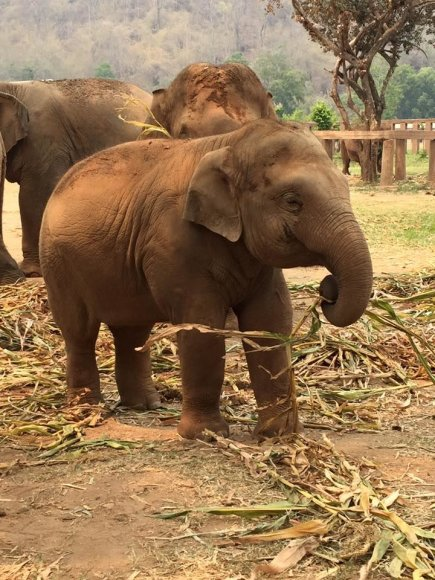 """""""Facebook""""/ Elephant Nature Park nuotr./Drambliai draustinyje"""