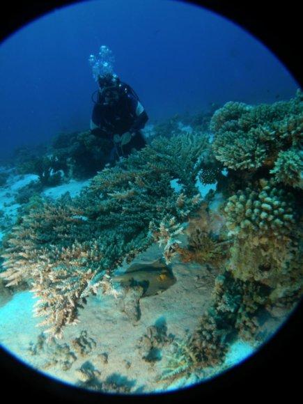 Asmeninė nuotr./Raudonoji jūra dažnai tampa pirma, kurioje turistai ryžtasi nardyti