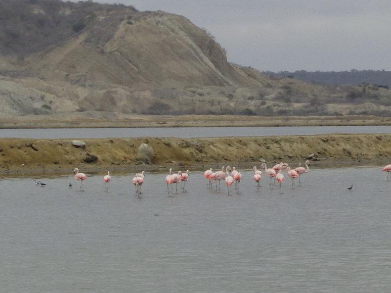 Gabijos Lebednykaitės nuotr./Mochalilla nacionalinis parkas
