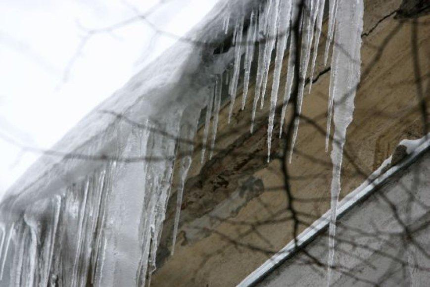 Varvekliai - pastatų savininkų galvos skausmas