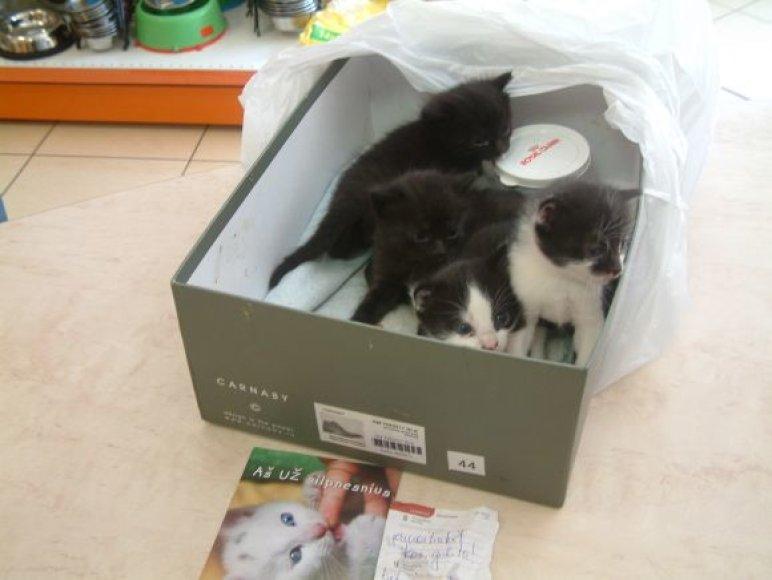 Be kačiukų dėžėje buvo ir instrukcija, kaip juos prižiūrėti
