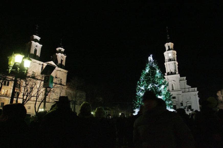 Šių metų Kauno miesto eglė