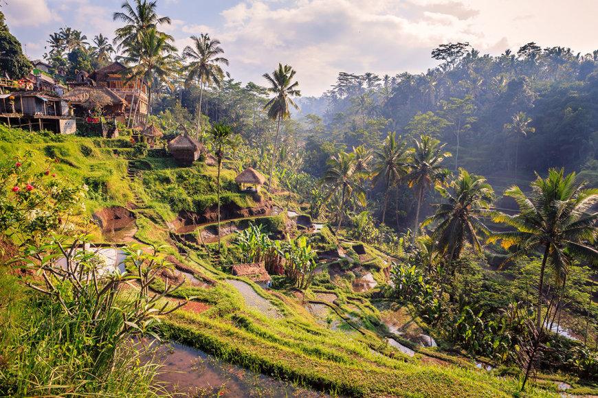 Shutterstock nuotr./Balis