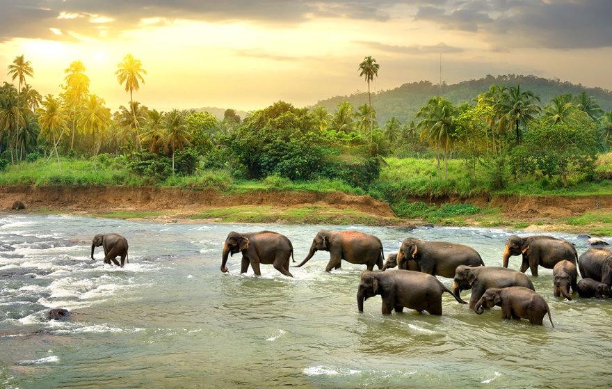 Shutterstock nuotr./Šri Lanka