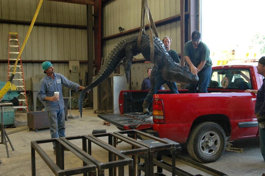 Yvette Archuleta-Tudury nuotr./Aligatoriai – neatsiejama Luizianos (JAV) gyvenimo dalis