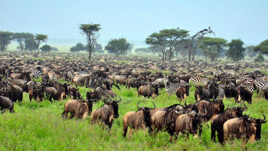 Shutterstock nuotr./Serengečio nacionalinis parkas