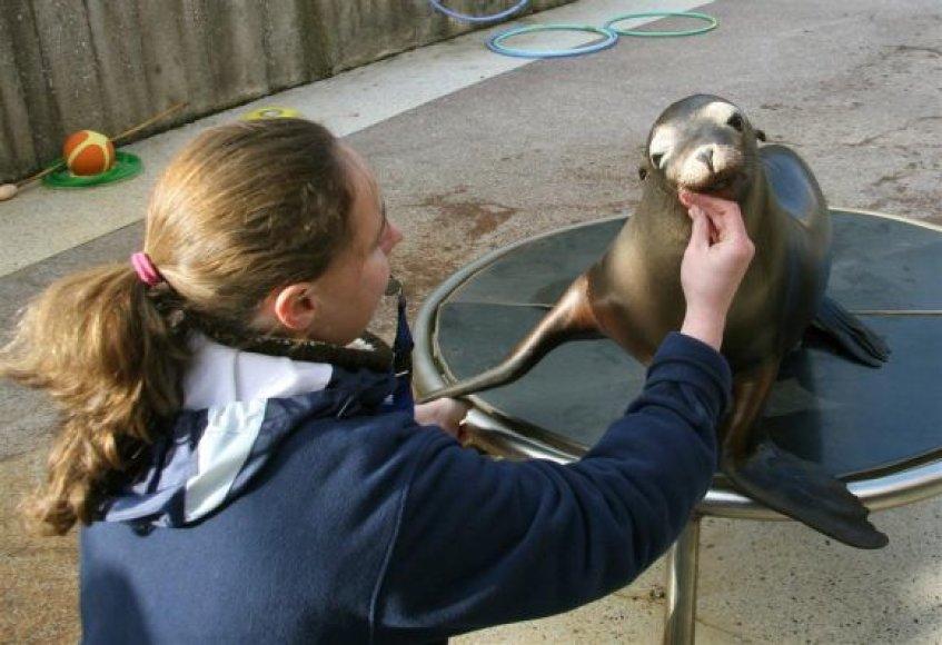 Užaugusi Kalifornijos jūrų liūtukė Matilda. Ja rūpinosi Jūrų muziejaus darbuotojai. 2010 m. lapkričio 11 d.
