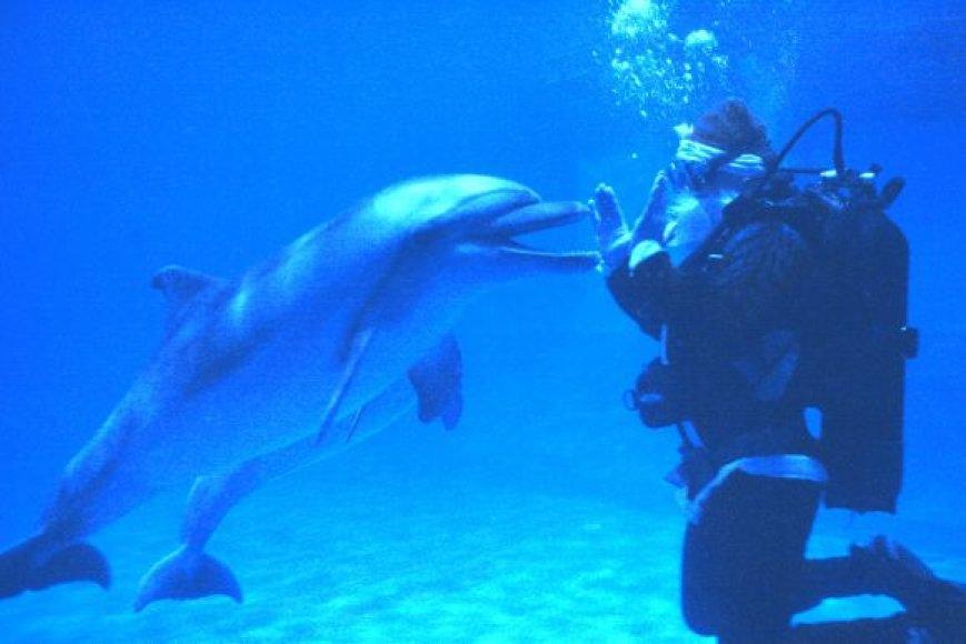 Kalėdų Senelis Lietuvos jūrų muziejuje nardys su delfinais.