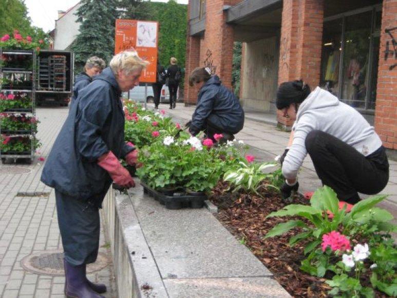 Klaipėdoje antradienį begonijomis ir pelargonijomis apsodinti miesto gėlynai.