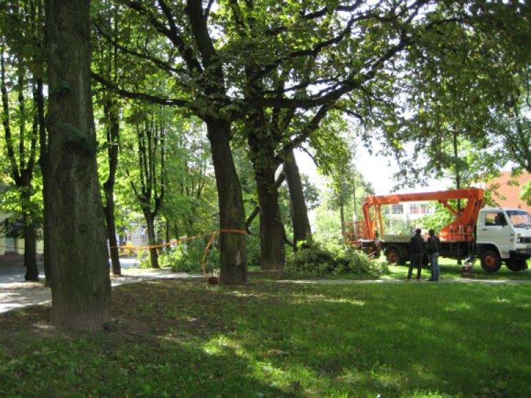 S.Daukanto gatvėje kuriam laiku užtvertas eismas, kol buvo šalinamas pavojingai nuvirtęs medis.