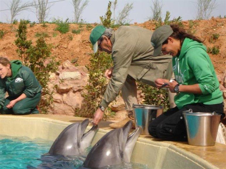 Delfinus į Graikiją atlydėjo treneriai ir veterinarijos specialistai.