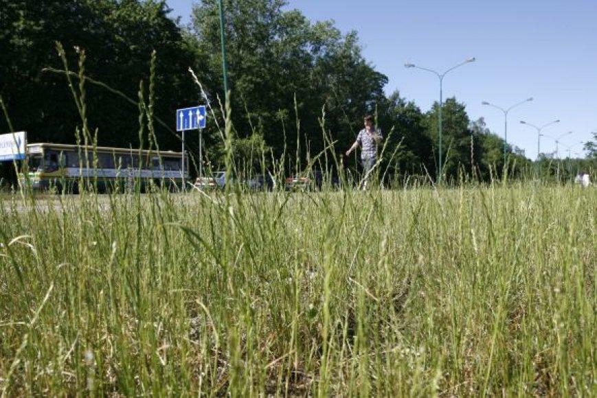 Miesto erdvės apsaugusios žolėmis.
