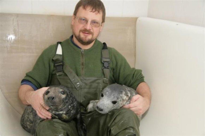 Pasak A.Grušo, aštuoni šiemet rasti nugaišę ruoniai nėra natūralus reiškinys.