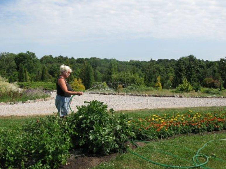 Botanikos sode apie 90 proc. laiko tenka skirti augalų laistymui.