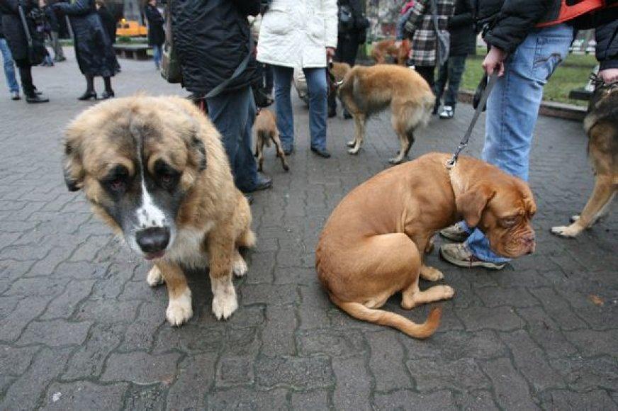 Griežtinti bausmes už žiaurų elgesį su gyvūnais ragino ir šunys