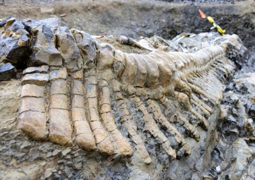 Meksikoje aptikti dinozauro uodegos kaulai.