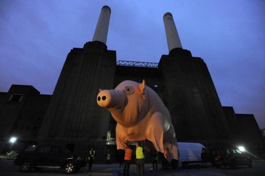 """""""Pink Floyd"""" kiaulė prie Londono Batersio jėgainės ruošiasi skrydžiui."""