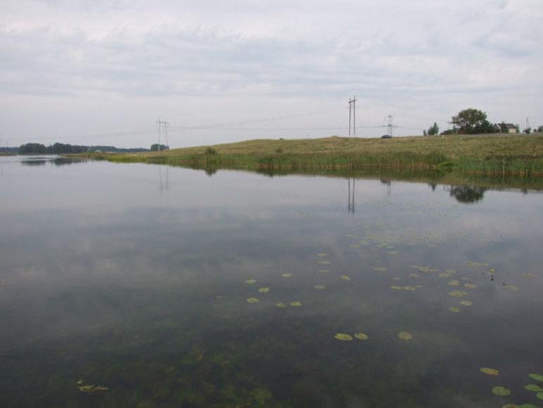 Geros vietos meškerioti ungurius – vandens augalijos prižėlusios įlankos