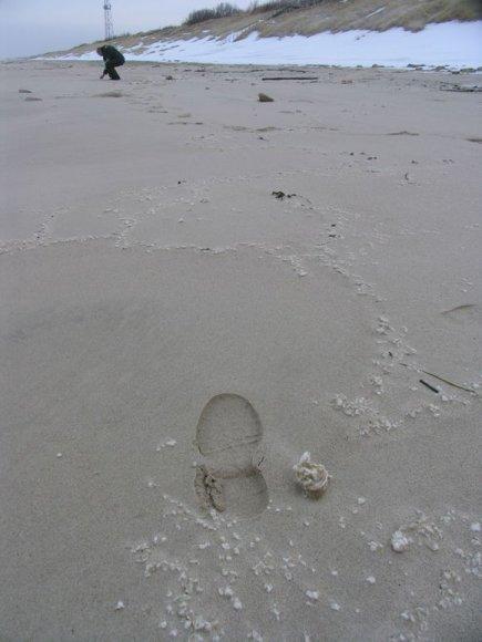 Teršalai Nidos paplūdimyje