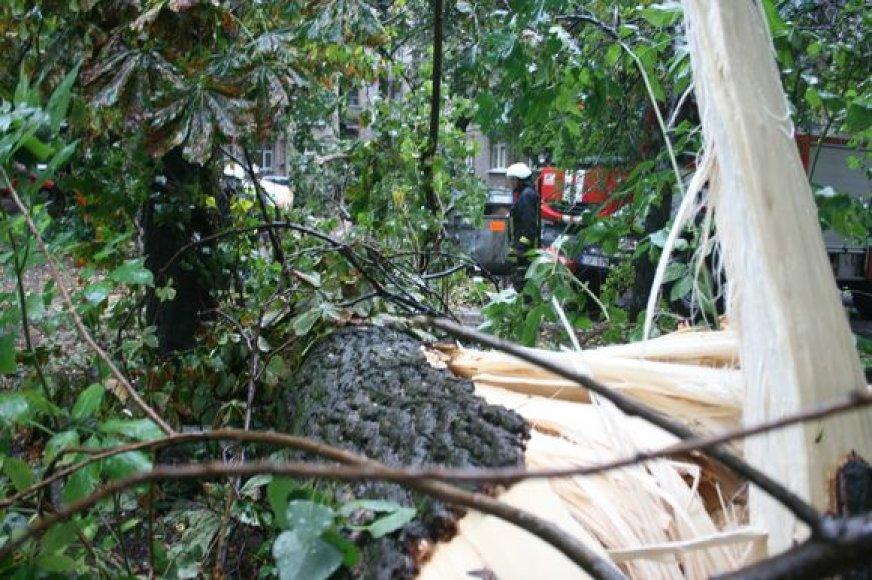 Praėjusią vasarą vėtra išvertė daug ąžuolų, kuriuose veisėsi reti vabalai