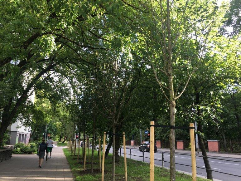 Tamo Stamulio nuotr./Naujai pasodinti medžiai Antakalnio gatvėje